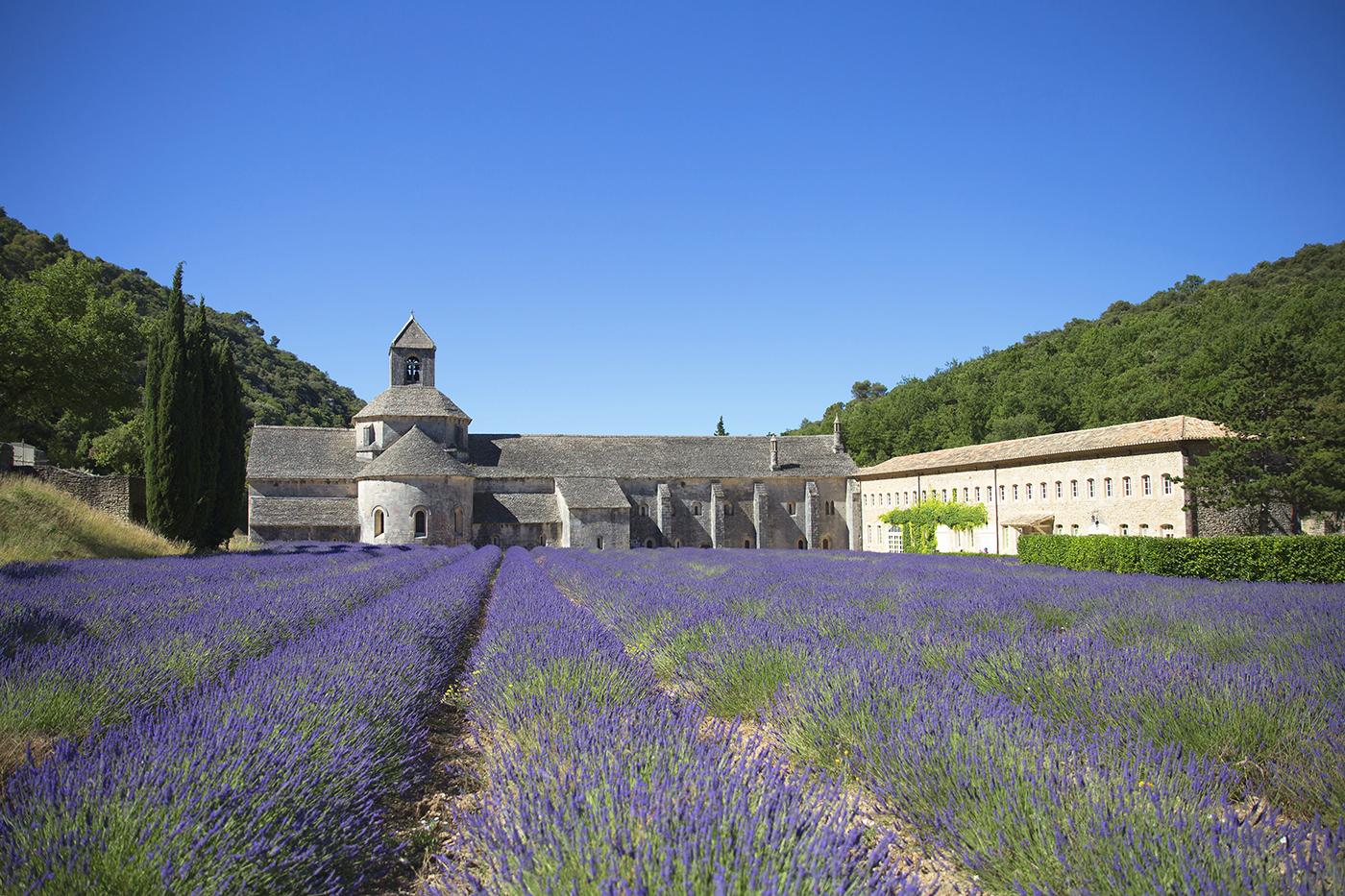 Lavender Roadtrip in Provence