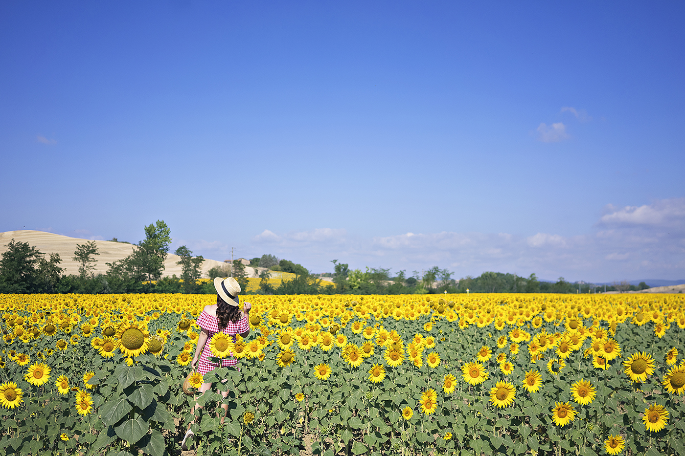 Chasing Sunflowers in Tuscany